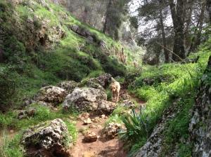 Nahal Aviv - Dishon 009
