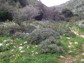 Nahal Aviv - Dishon 046