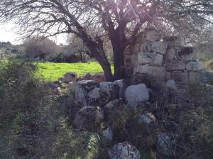 usha ruins